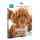 NOS ANIMAUX, DOUX DEHORS, SAUVAGES DEDANS BLU-RAY