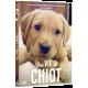 UNE VIE DE CHIOT-Packshot 3D