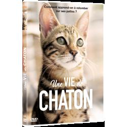 UNE VIE DE CHATON